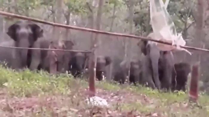 Verfolgungsjagd beim Wäsche aufhängen: Elefanten gehen auf Frau los