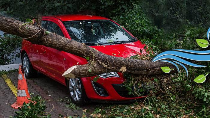 Sturmschäden bezahlen verschiedene Versicherungen.