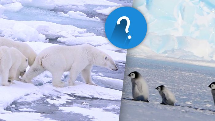 Die Arktis und die Antarktis werden oft verwechselt.