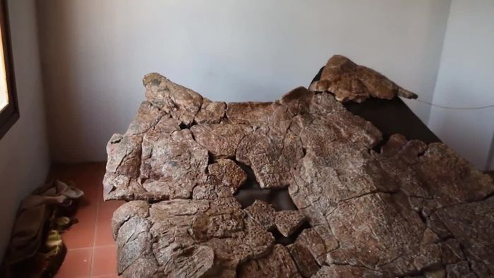 Groß wie ein Auto: Überreste von Ur-Schildkröte entdeckt