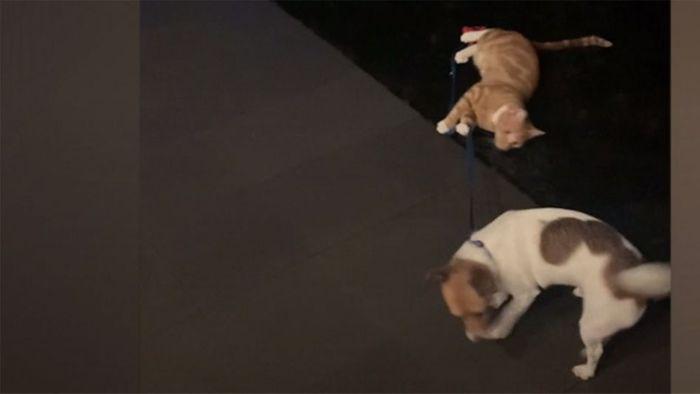 Frech! Katze hält Hund vom Gassi gehen ab