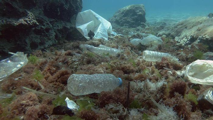 Plastik im Meer ist ein gefährliches Problem für viele Tiere und unsere Umwelt.