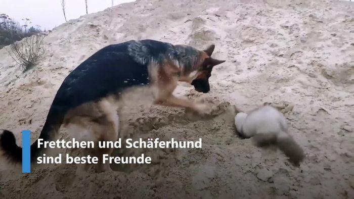 Frettchen und Schäferhund sind Herz und Seele