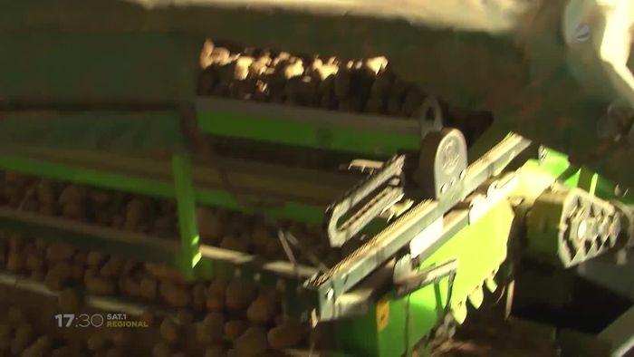 Kartoffelnachfrage durch Coronavirus in Niedersachsen gestiegen