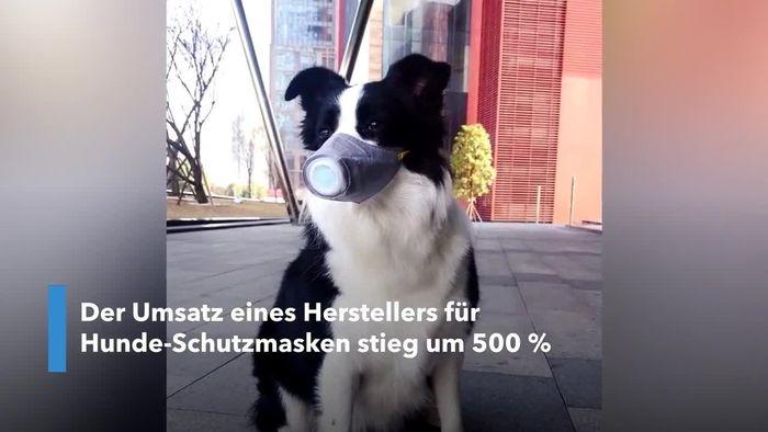 Gesichtsmasken für Hunde: Unternehmen kann sich vor Anfragen kaum retten