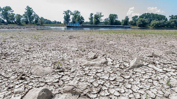 Mai-Prognose: Wie 2018? Neues Dürre-Drama droht