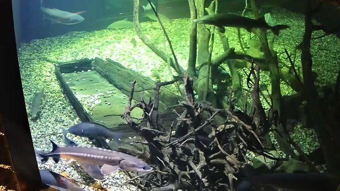 HD Live Webcam AQUATIKA – FRESHWATER Aquarium webcam Karlovac