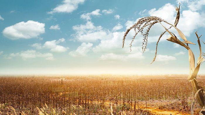 Juni-Prognose: Sommerwetter kommt - Trockenheit bleibt