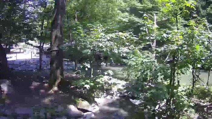 HD Live Webcam Squirrel monkey webcam Saimiri ZOO Ljubljana