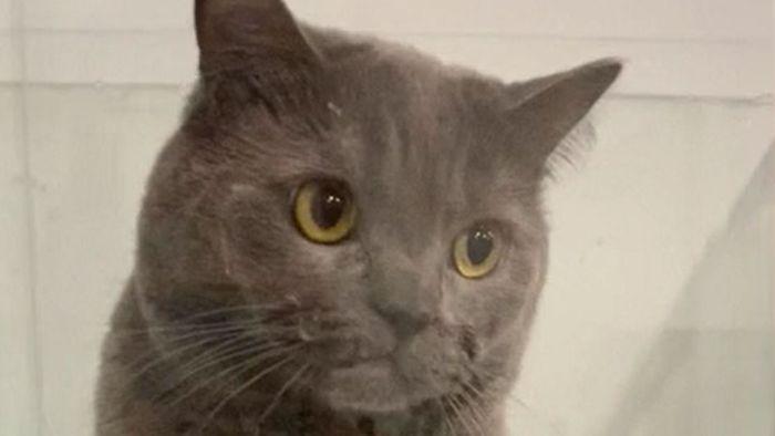 Klettern ging schief: Katze sitzt in Aquarium fest