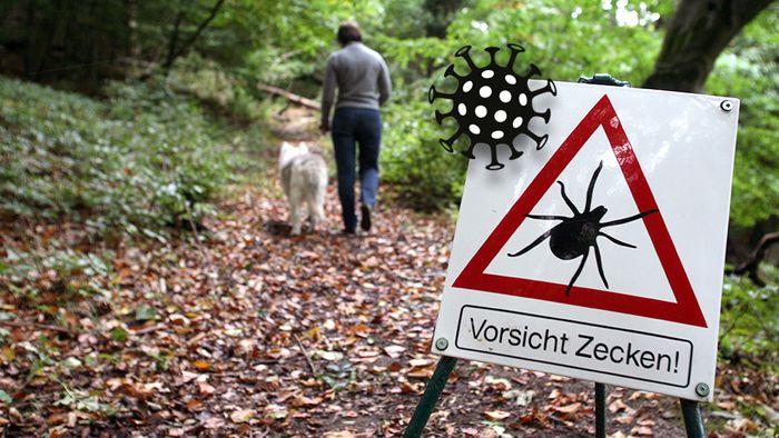 Das Deutsche Rote Kreuz warnt, dass die Zeckengefahr in Zeiten von Corona erhöht ist.
