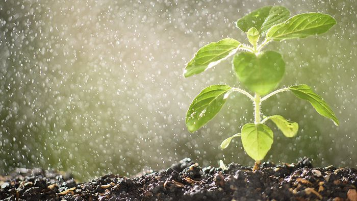 Mit einigen Tipps, kannst du deinen Pflanzen bei Hitze helfen.