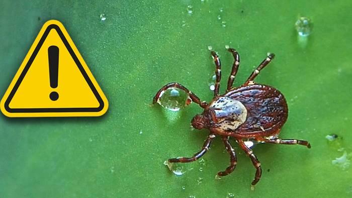 Zecken können verschiedene Krankheiten übertragen.