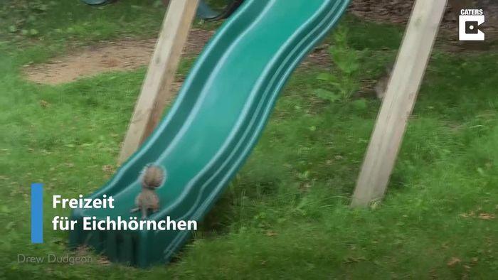 Verspielter Waldbewohner: Eichhörnchen tobt sich auf Rutsche aus