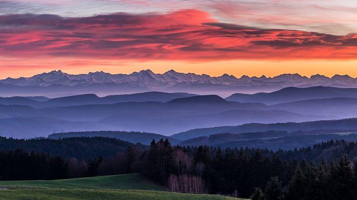 Kuck Kuck ruft es aus dem gesamten Schwarzwald! Willkommen zurück!