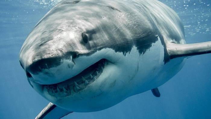 In der Nordsee könnte es durch die Erwärmung in 200 Jahren auch Haie geben.