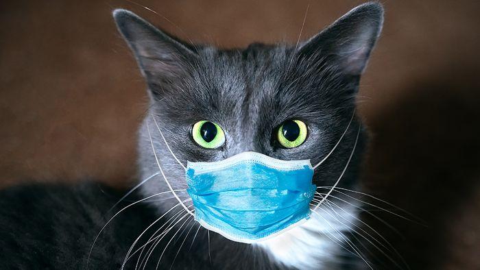 Coronavirus und Tiere: Das wissen wir bereits