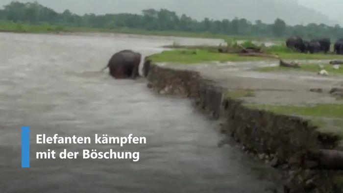 Zwei Elefanten retten Nachwuchs aus reißendem Fluss