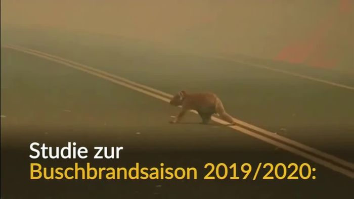 Buschbrände in Australien: Fast drei Milliarden Tiere tot