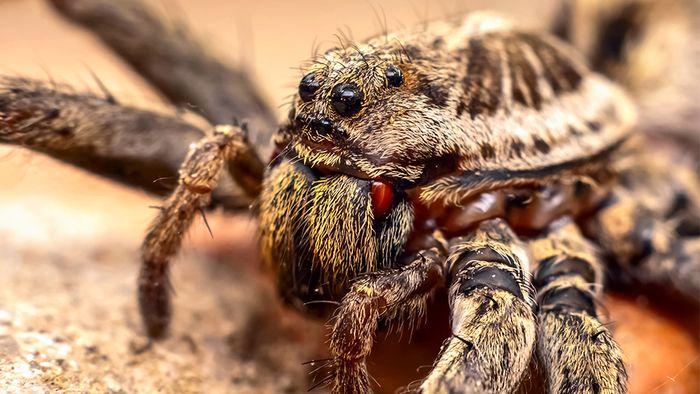 In Deutschland gibt es circa 1000 Spinnenarten.