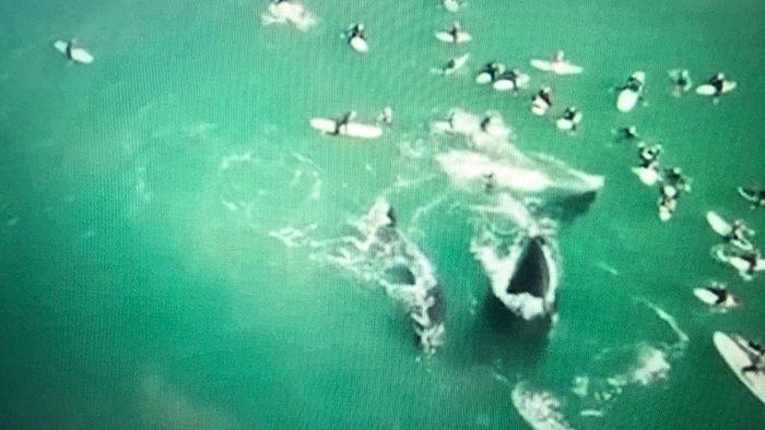 Wal-Angriff vor Küste Australiens: Zwei Schwimmerinnen verletzt