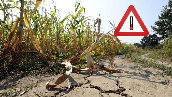 Dürre in Deutschland: Lage verschärft sich extrem!