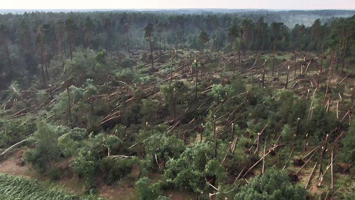 Mehrere Fallböen haben am Montagnachmittag einen ganzen Wald zerstört.