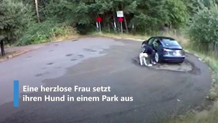 Kaltblütig ausgesetzt: Frauchen lässt Hund im Park zurück