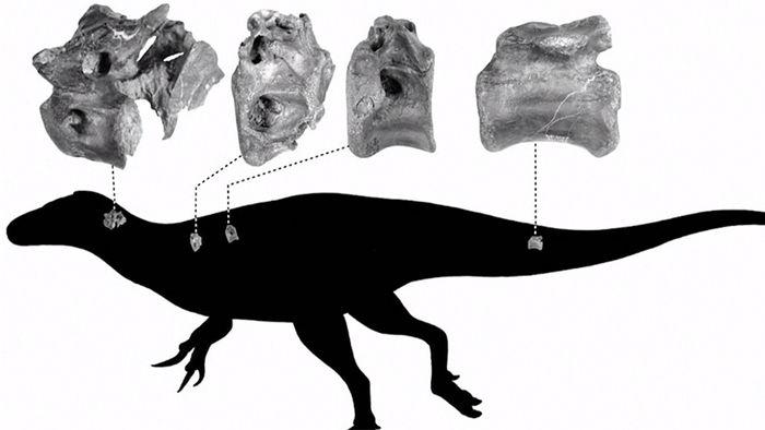 Verwandte des T-rex: Neue Dinosaurierart entdeckt