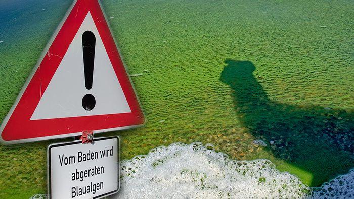 Im Sommer kommt es in natürlichen Gewässern oft zu Blaualgen.