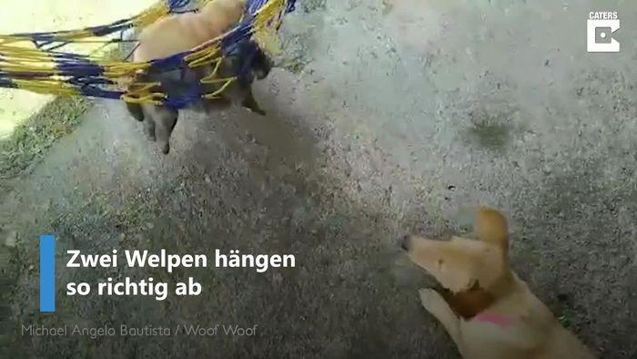 So süß: Hundemama wiegt Welpen in Hängematte in Schlaf