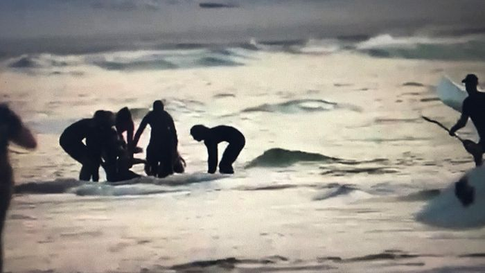 Erneut Surfer nach Hai-Attacke gestorben