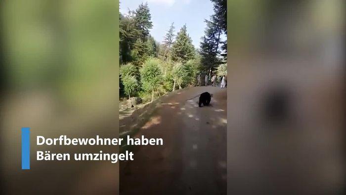 Bärenattacke: Raubtier geht auf Dorfbewohner los