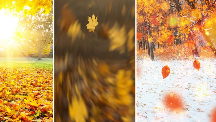 Oktoberprognose: Golden, stürmisch und auch weiß?