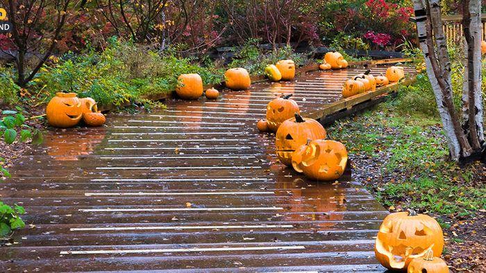 Wetter 16 Tage: Passend zu Halloween - Schauriges Oktoberende