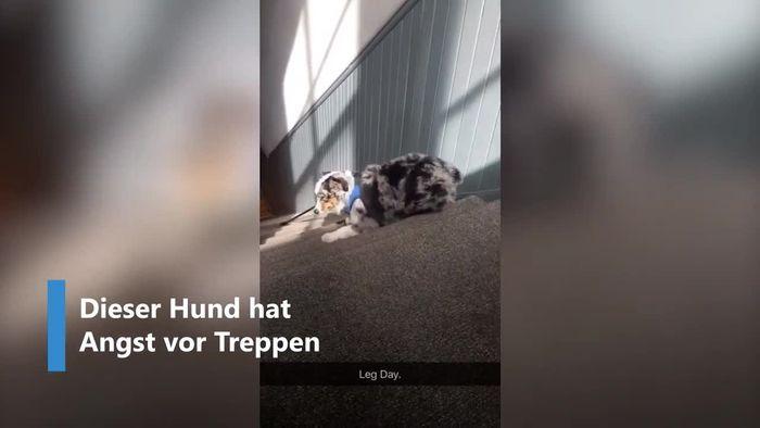 Treppen-Phobie: Hund bezwingt Stufen nur rückwärts