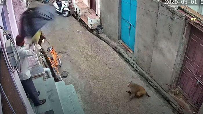 Mit Regenschirm vertrieben: Affe attackiert Mann