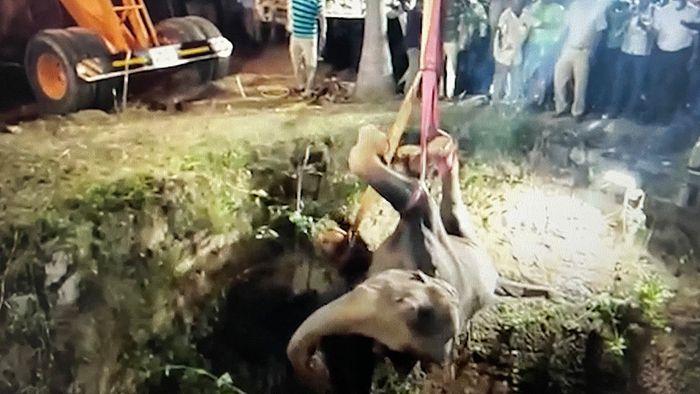 Sturz in Brunnen: Junger Elefant nach 16 Stunden gerettet