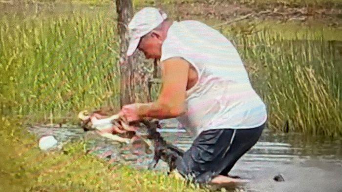 Alligator schnappt sich Hund: Besitzer wird zum Helden