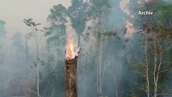 Regenwaldzerstörung in Brasilien geht unvermindert weiter