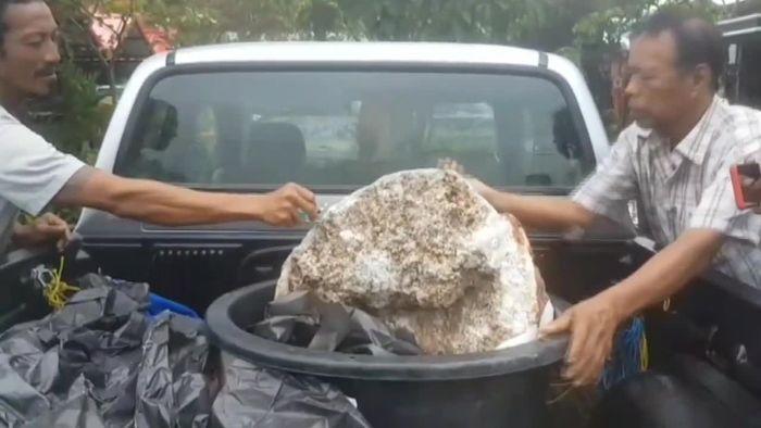 Wal-Kotze macht Fischer zum Millionär