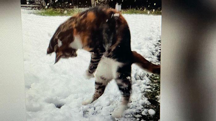Verwirrter Stubentiger: Kätzchen erlebt ersten Schnee