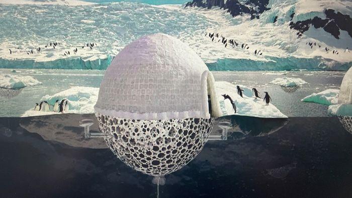 Antarktis: Schwimmende Iglus sollen Kaiserpinguine retten