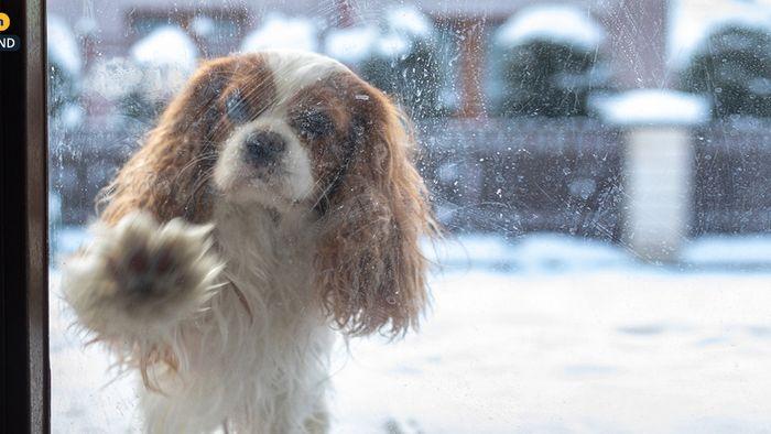 Wetter 16 Tage: Winter klopft nochmal an!