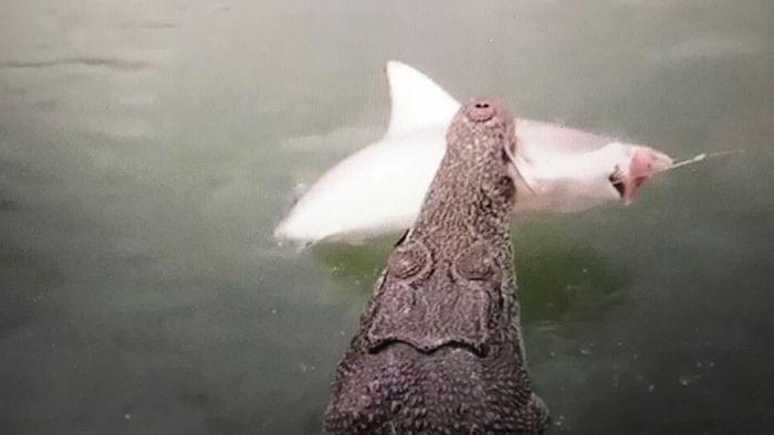 Riesiges Raubtier schnappt Anglern Beute weg