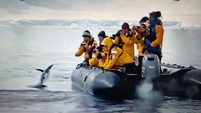 Schwertwale jagen Pinguin – doch der ist schlau