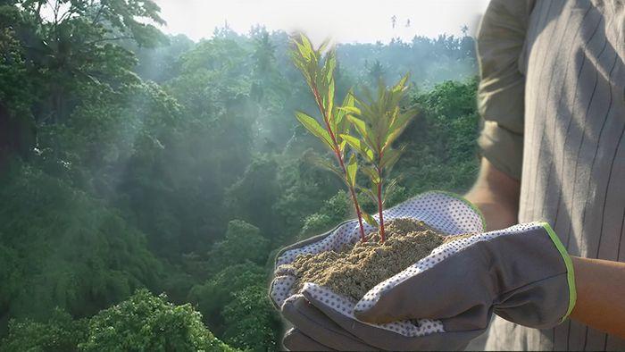 Bäume zum Klimaschutz werden meist in den Tropen gepflanzt.