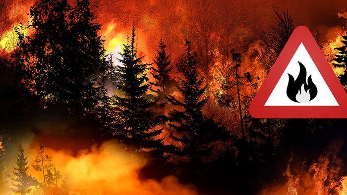 Die steigende Zahl an Waldbränden beeinflusst unser Klima.