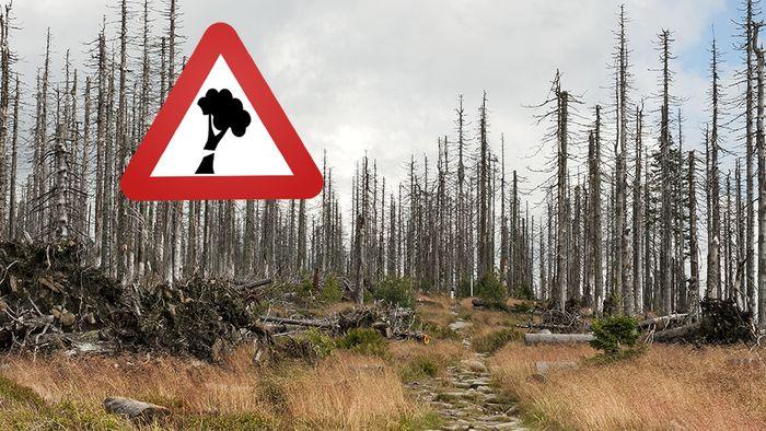 Für das sogenannte Waldsterben gibt es konkrete Ursachen.