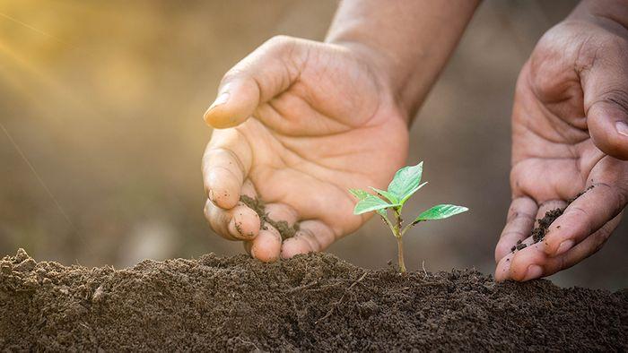 Es gibt Lösungsansätze, um das Waldsterben aufzuhalten.